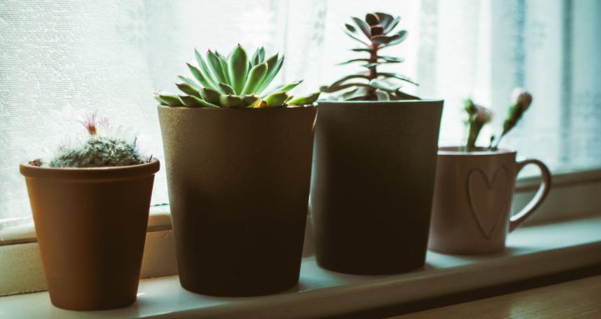 Blumen auf einer Fensterbank